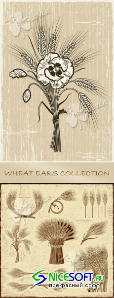Wheat Ears Collection 0105