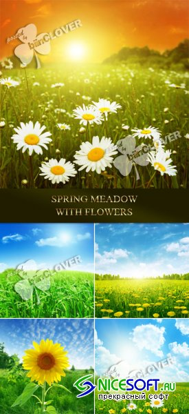 Spring meadow with flowers 0105