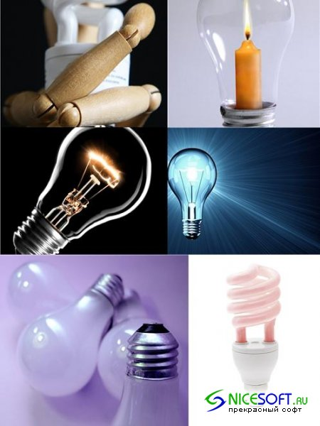 Bulbs - Stock Photo