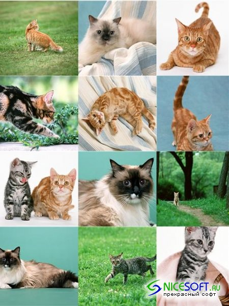 Stock Photo - Cats #2