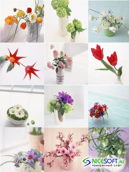 Stock Photo - Decorative Flowers #2