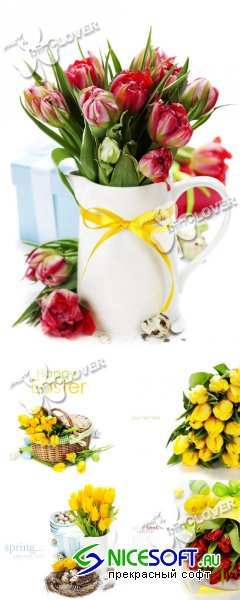 Easter and spring flowers 0384