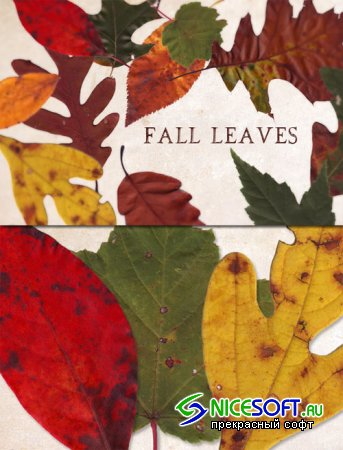 WeGraphics - Fall Leaves Texture Pack