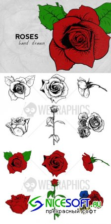 WeGraphics - Hand drawn roses