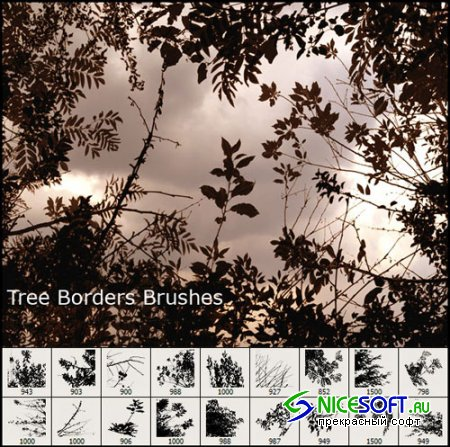 Tree Borders Photoshop Brushes